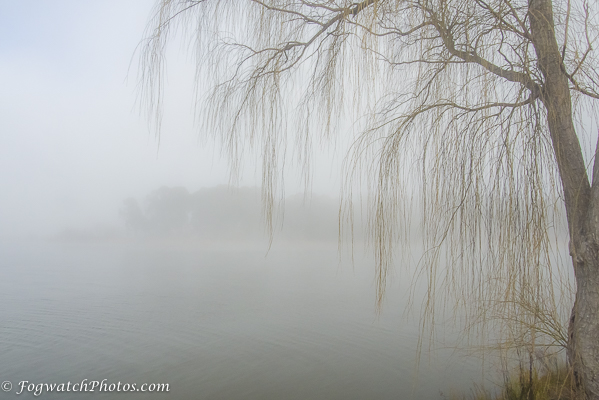 Trees in fog over water